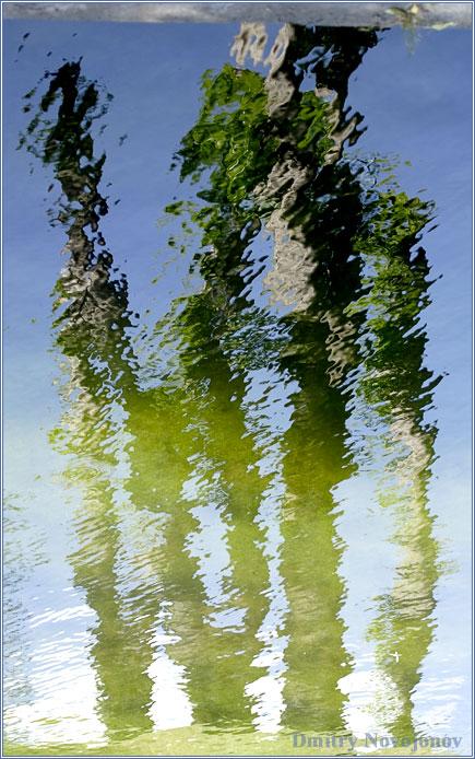 Практически Дали : Рябь на воде придала группе деревьев отголоски руки Великого Мастера (Фотограф Дмитрий Новоженов)