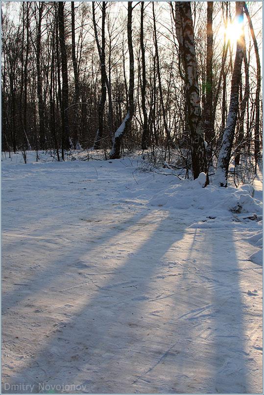 Левитановское : Мне очень нравится картина, которую рисуют теплые солнечные лучи на холодных зимних тенях в лесу, когда солнце клонится к закату. (Фотограф Дмитрий Новоженов)