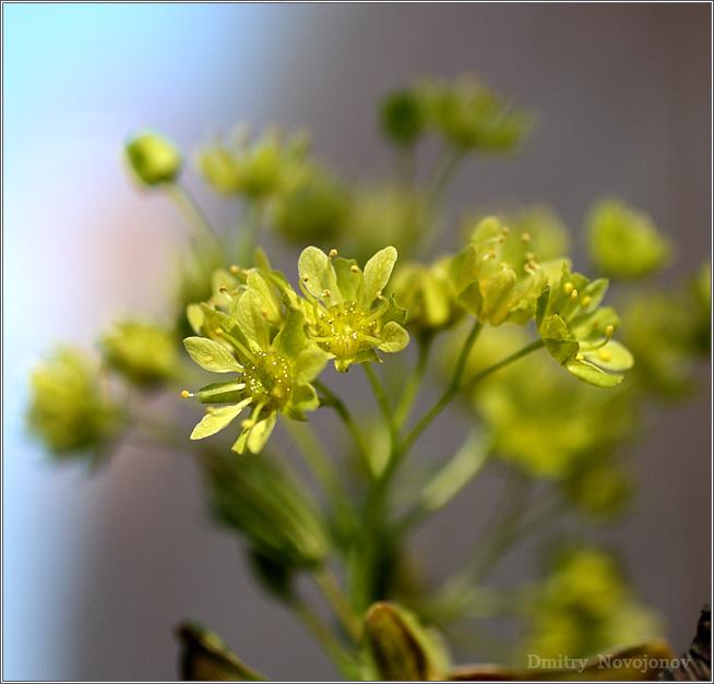 Странный цветок : Много лет я смотрел на их цветение и, лишь когда начал фотографировать, заметил, что это цветы. (Фотограф Дмитрий Новоженов)