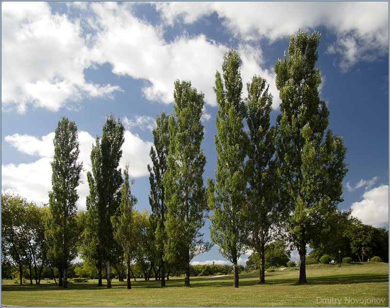 Тоска по лету : Вот и лето прошло, словно и не бывало... (Фотограф Дмитрий Новоженов)